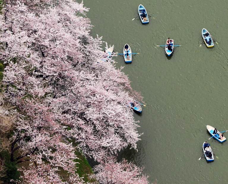 Kirschblüte in Japan - imago